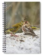 Give Me A Kiss. Redpolls And Greenfinches Spiral Notebook