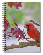 Give Me Shelter - Male Cardinal Spiral Notebook