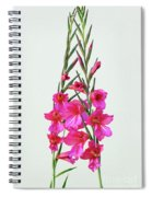 Gladioli Byzantinus In Love Spiral Notebook