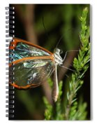 Glasswinged Butterfly Spiral Notebook