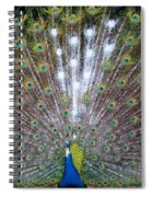 Glassy Peacock  Spiral Notebook