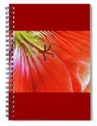 Glorious Geranium Spiral Notebook