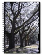 Glorious Live Oaks With Framing Spiral Notebook