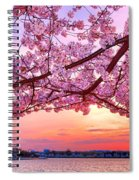 Glorious Sunset Over Cherry Tree At The Jefferson Memorial  Spiral Notebook