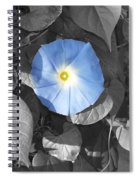 Glory Blue Spiral Notebook