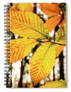 Glowing Beech Leaf Branch Spiral Notebook