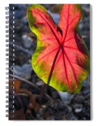 Glowing Coladium Leaf Spiral Notebook