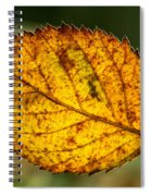 Glowing Fall Leaf Spiral Notebook