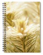 Glowing In Sunlight Golden Plants Spiral Notebook