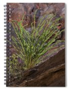 Glowing Ocotillo Spiral Notebook