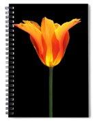 Glowing Orange Tulip Flower Spiral Notebook