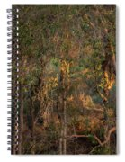 Glowing Trees Spiral Notebook