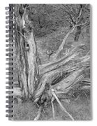 Gnarled Cedar Stump Spiral Notebook