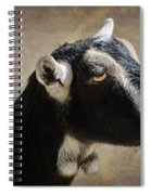 Goat  1 Spiral Notebook