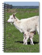 Goat With Just Born Little Goat Spring Scene Spiral Notebook