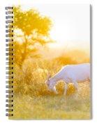 Goats Grazing At Sunset Spiral Notebook