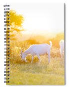 Goats Grazing In Field Spiral Notebook