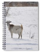 Goats In Snow Spiral Notebook