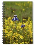 Gold And Blue Spiral Notebook