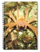 Gold Hunting Spider Spiral Notebook