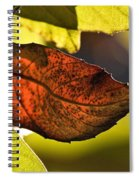 Gold Leaf In Fall Spiral Notebook