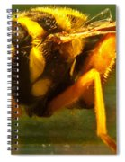 Gold Syrphid Fly Spiral Notebook