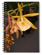 Gold Yellow Orchid  Spiral Notebook