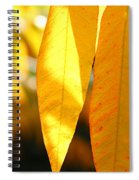 Golden Accent  Spiral Notebook