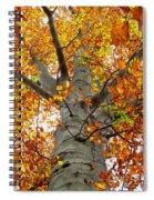 Golden Beech Spiral Notebook