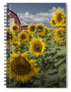 Golden Blooming Sunflowers With Red Barn Spiral Notebook