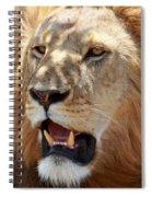 Golden Boy Spiral Notebook