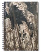 Golden Brown Spiral Notebook