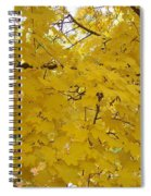 Golden Canopy Spiral Notebook