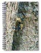 Golden Carpenter Ant  Spiral Notebook