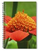Golden Crown On Red Spiral Notebook