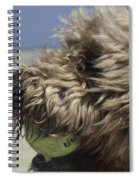 Golden Doodle And His Ball Spiral Notebook
