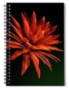 Golden Fireworks Flower Spiral Notebook