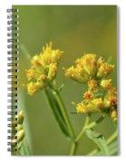 Golden Flattop Spiral Notebook