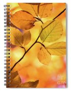 Golden Foliage Spiral Notebook