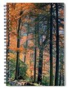 Golden Forest Path Spiral Notebook