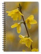 Golden Forsythia Spiral Notebook