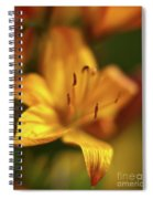 Golden Gazer Spiral Notebook
