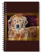 Golden Glowing Retriever Spiral Notebook
