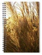 Golden Grass In Sunset Spiral Notebook