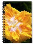 Golden Hibiscus - Hawaii Spiral Notebook