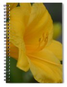 Golden Lily 18-2 Spiral Notebook