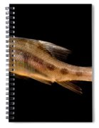 Golden Line Barbel Spiral Notebook