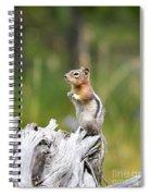 Golden Mantled Ground Squirrel Spiral Notebook