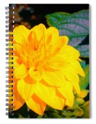 Golden Moment In The Morning Spiral Notebook