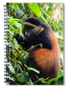 Golden Monkey II Spiral Notebook